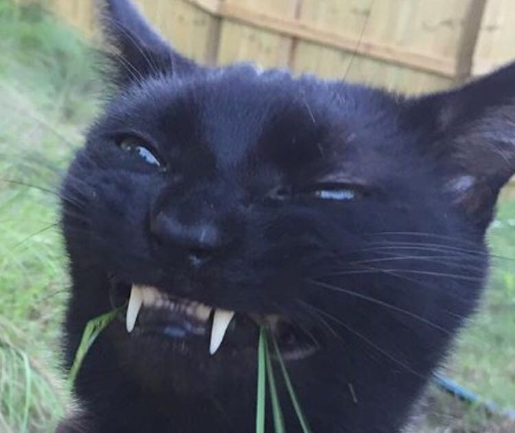 teeth,grass,Cats