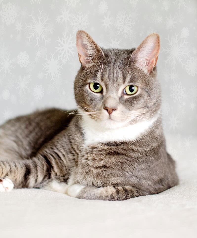 portrait Cats holidays - 8998681600