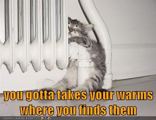 gotta takes kitten where caption finds - 8998811136