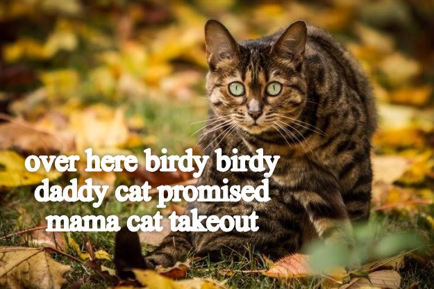 cat promised daddy birdy caption takeout