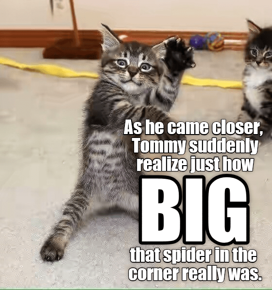 spider,kitten,big,closer,caption,realize