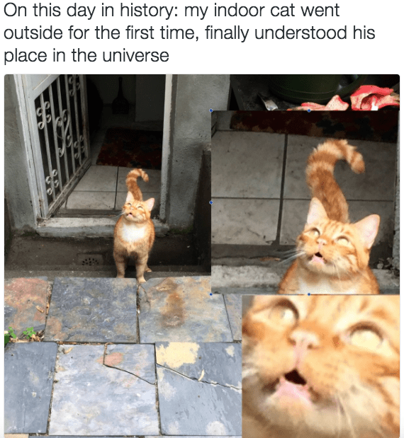 Cat - On this day in history: my indoor cat went outside for the first time, finally understood his place in the universe SE