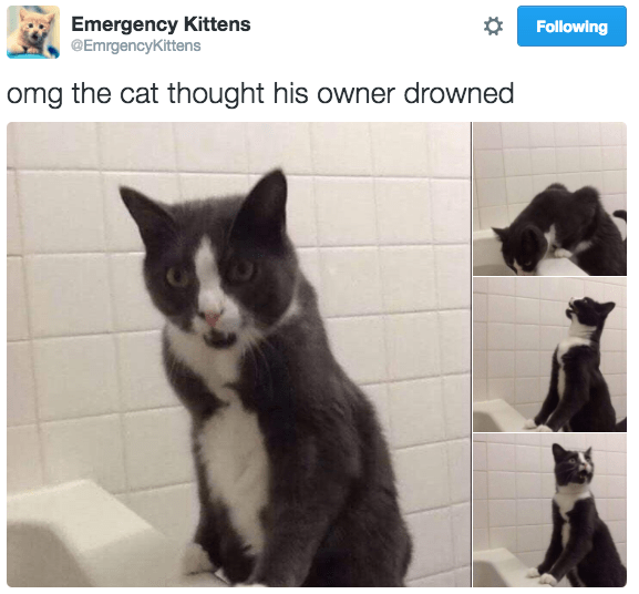 Cat - Emergency Kittens @EmrgencyKittens Following omg the cat thought his owner drowned