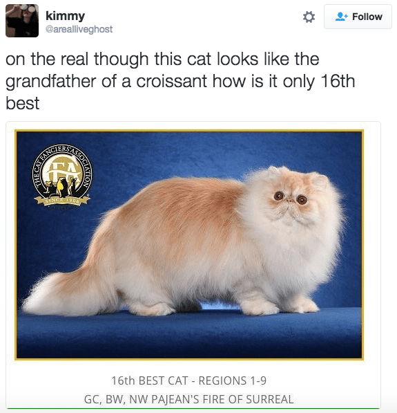 Cat - kimmy @arealliveghost Follow on the real though this cat looks like the grandfather of a croissant how is it only 16th best SNCE 19n 16th BEST CAT REGIONS 1-9 GC, BW, NW PAJEAN'S FIRE OF SURREAL