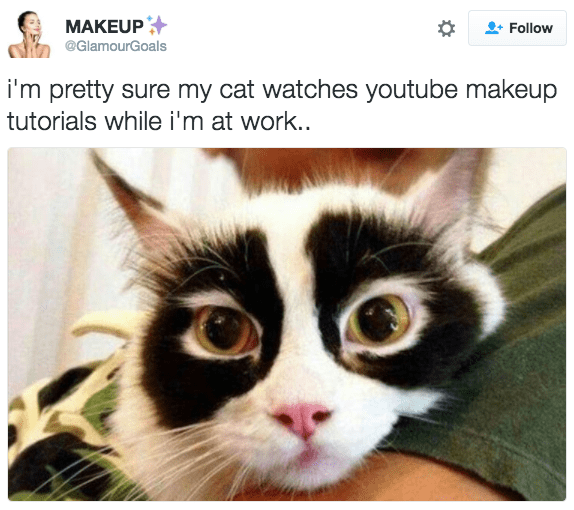 Cat - MAKEUP Follow @GlamourGoals i'm pretty sure my cat watches youtube makeup tutorials while i'm at work..