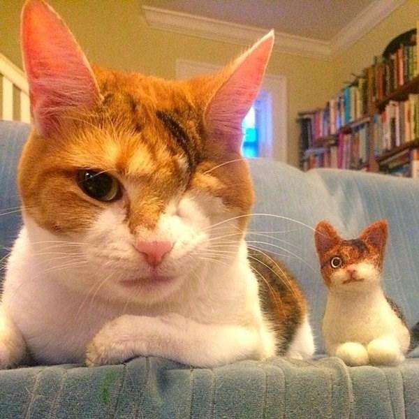 Memes Cats son - 8998918656