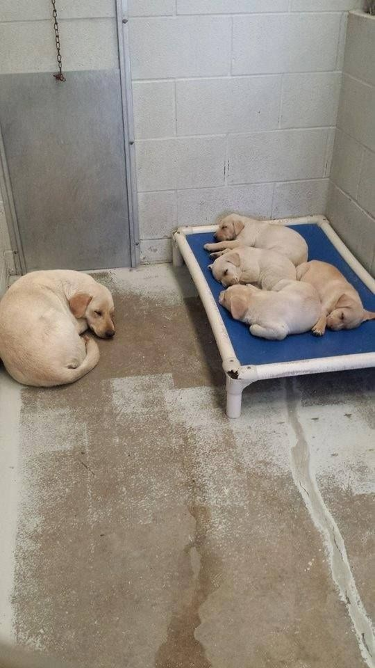 aww shelter dogs puppy family mom - 8998923264