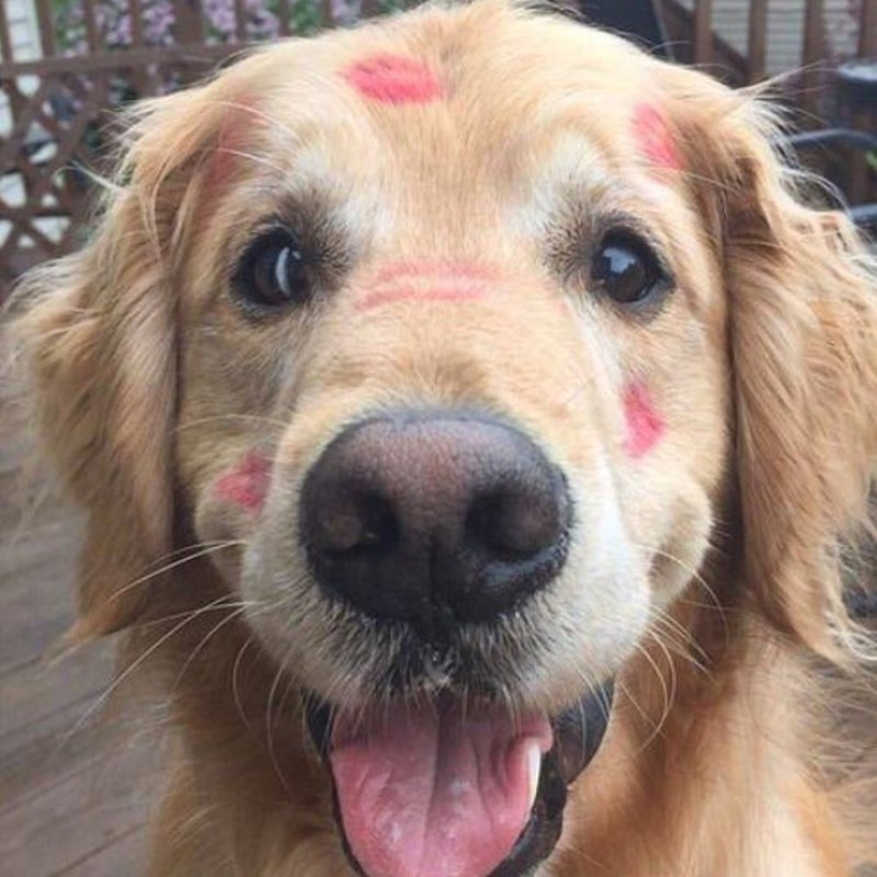dogs kisses lipstick - 8998956288