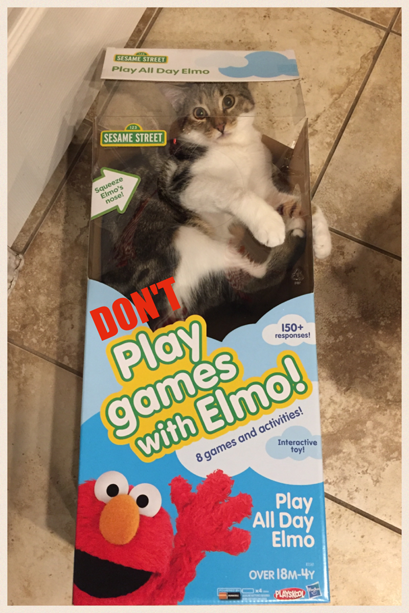 box elmo dont Cats - 8998956544