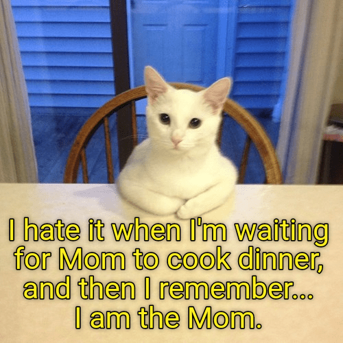 hate cat waiting dinner caption remember mom - 8998973184
