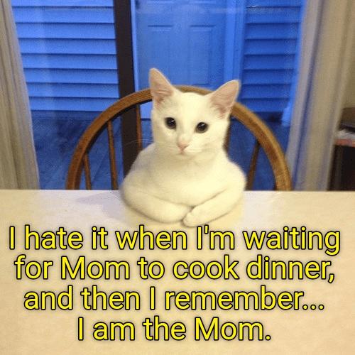 hate cat waiting dinner caption remember mom - 8998973184