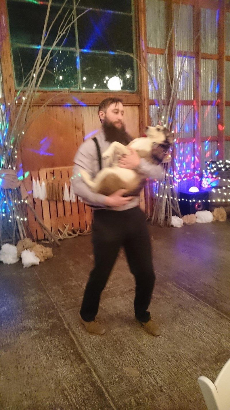 dancing dogs beard wedding - 8999263232