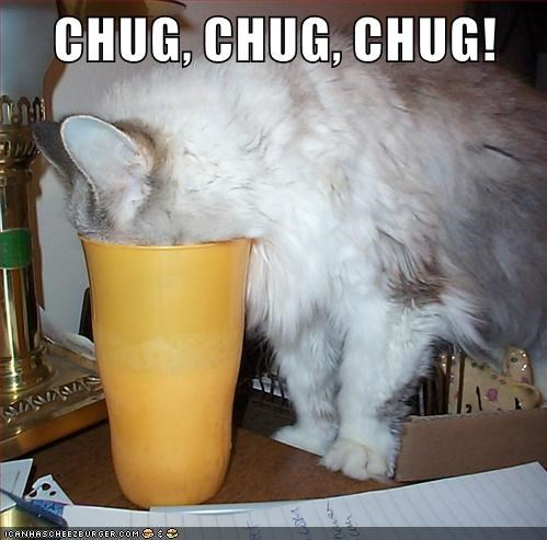 cat chug chug chug caption - 8999290368