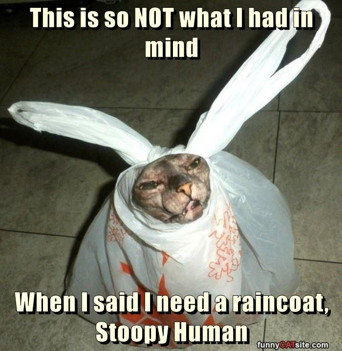 raincoat cat had mind caption not what - 8999390208