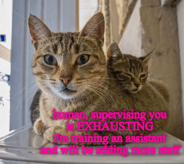 adding,supervising,human,exhausting,caption,Cats