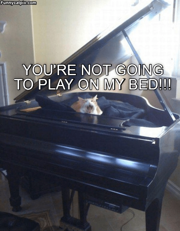 Cheezburger Image 8999481600