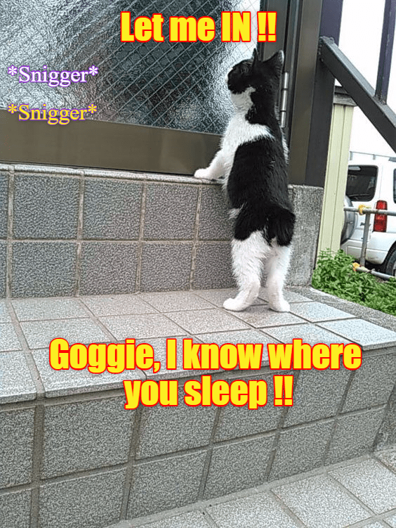 know cat goggie let me in sleep caption