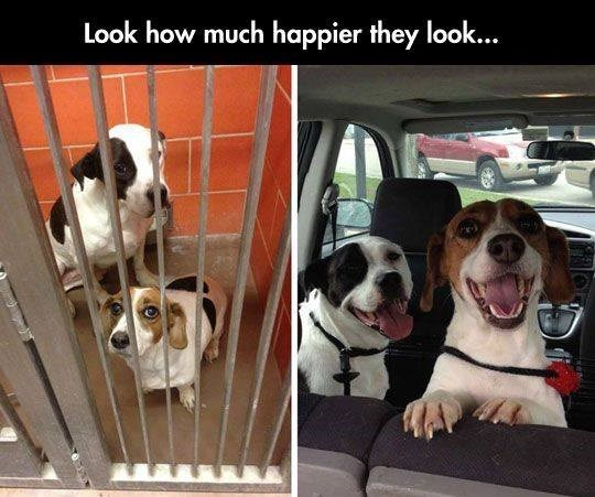 dogs adoption Before And After rescue