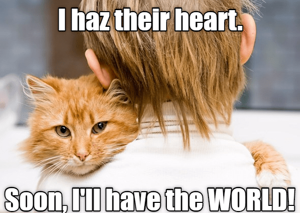 world cat heart SOON caption - 8999512320