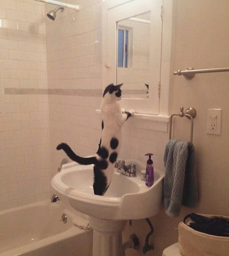 mirror Cats - 8999512576