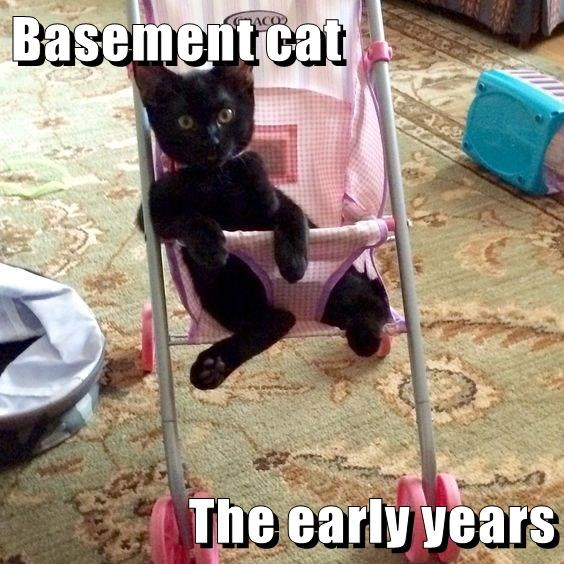 basement cat kitten early years caption - 8999527936