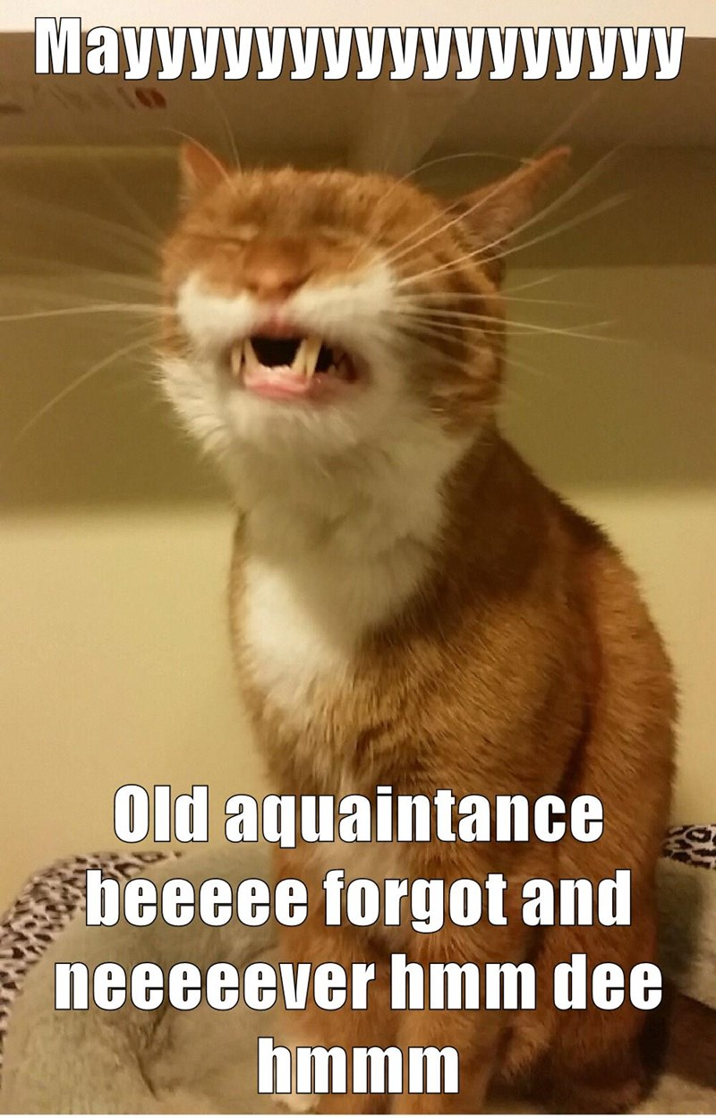 cat singing auld lang syne caption - 8999529216