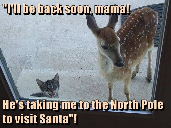 cat,back soon,mama,taking,santa,north pole,caption