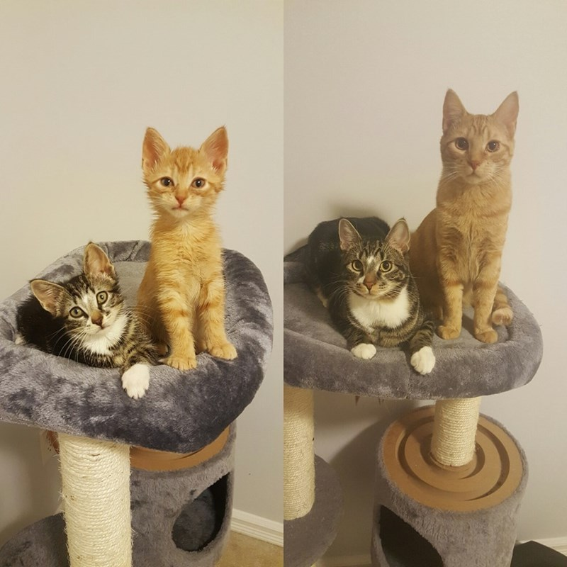 Then And Now Cats - 8999559936
