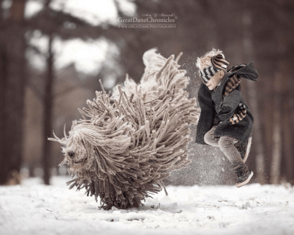 Snow - GreatDaneChronicles www.GREATDANE PHOTOGRAPHY HIL