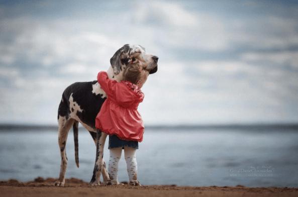 Dog - GreatDaneChonides