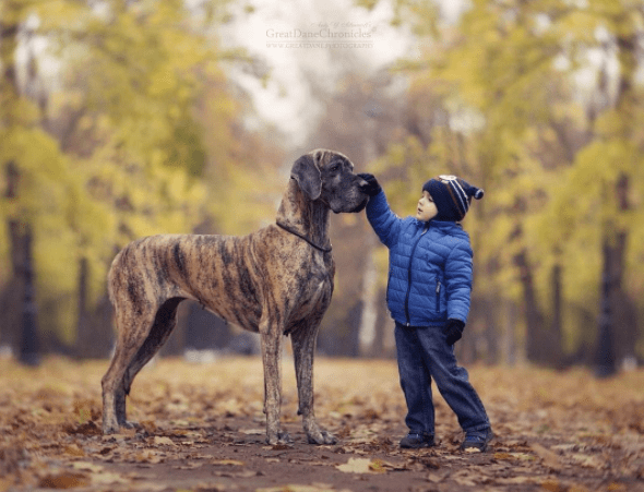 Dog - GreatDaneChronicles www.c NL OI