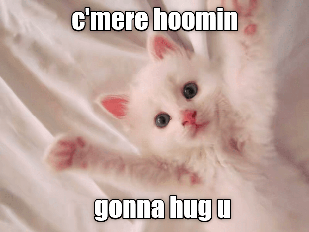 kitten,human,caption,come here,hug