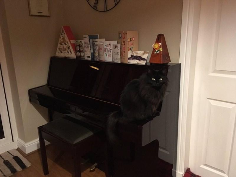 Piano - AVE A RIA ME TAY HT...m
