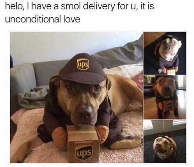 dogs cute UPS delivery