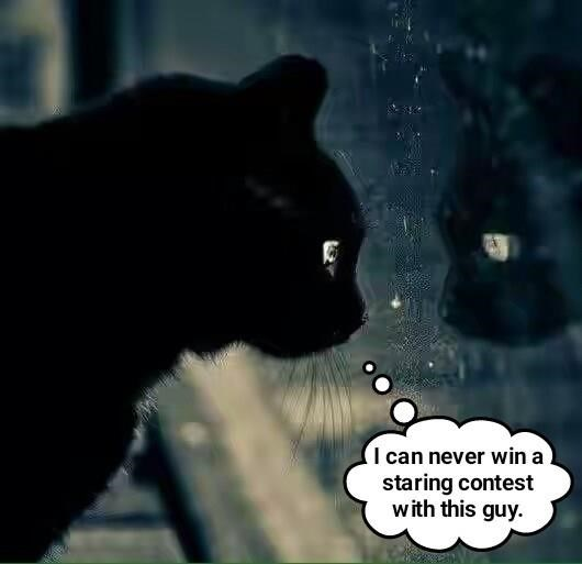 cat never caption staring contest win - 9000099072