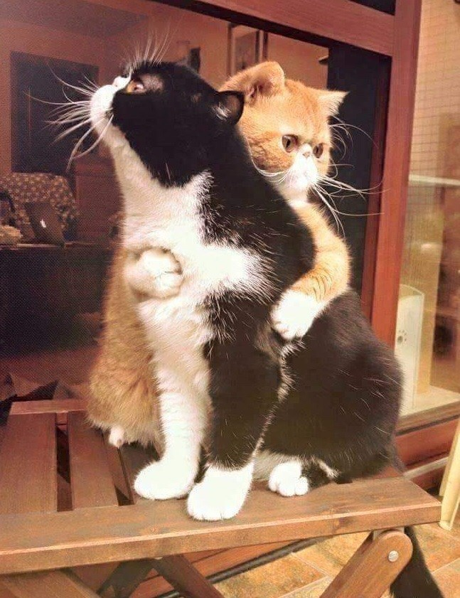 friends,Cats,hug