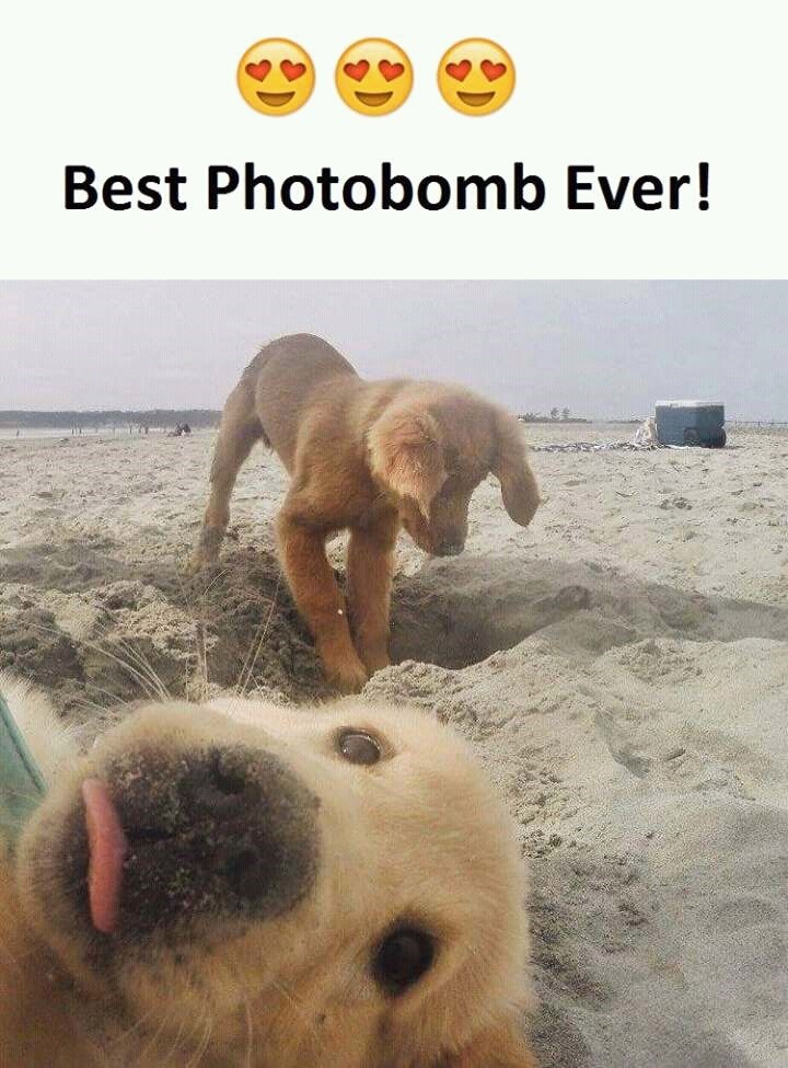 photobomb puppy