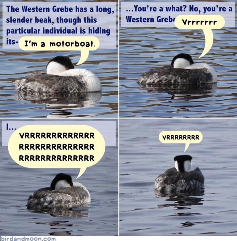 ducks motorboat image - 9000246528