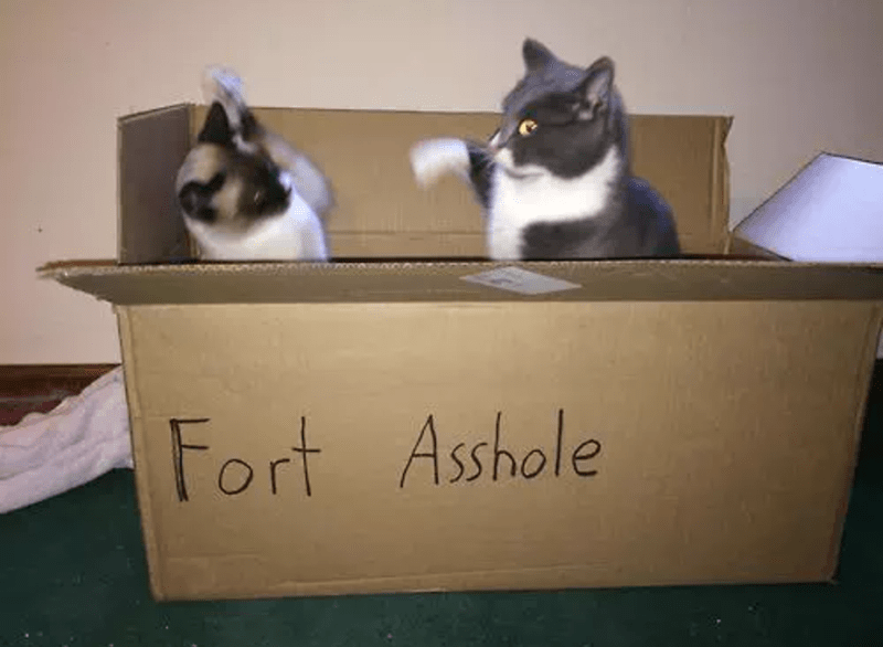 cardboard box,fort,Cats,asshole