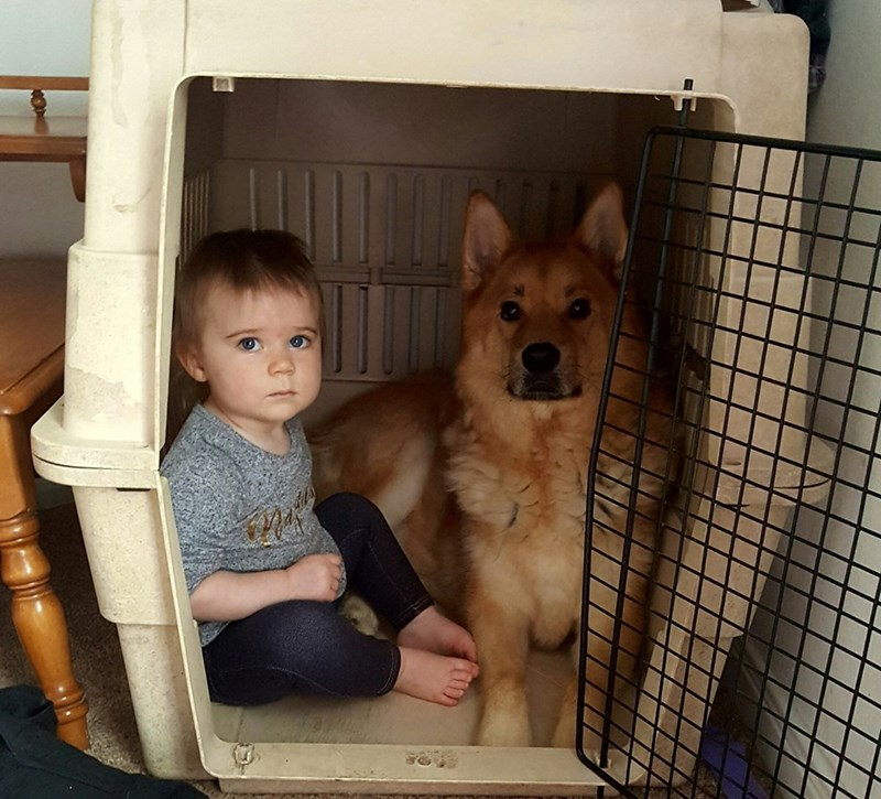 dogs,baby,secret,crate