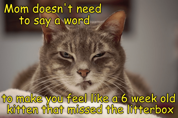 litterbox,cat,kitten,caption,missed,mom