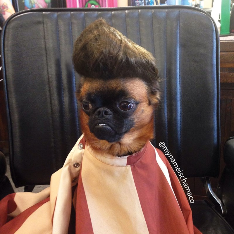 hair dogs bruno mars - 9000379392