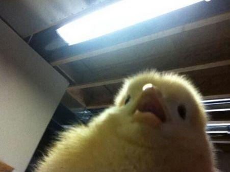 animal selfies - Nose