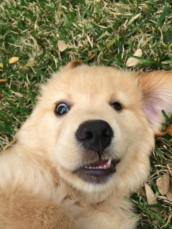 animal selfies - Dog