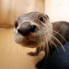 animal selfies - Mammal