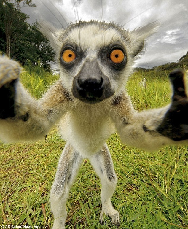 animal selfies - Mammal - A@ Caters News Agency