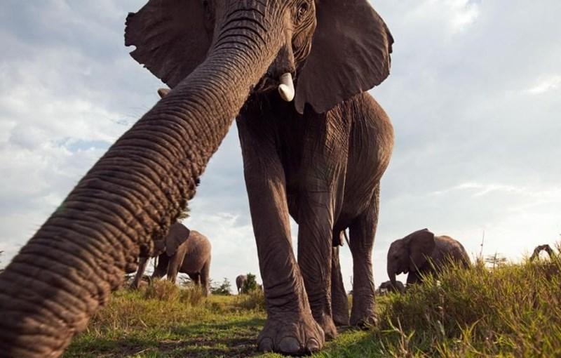 animal selfies - Elephant