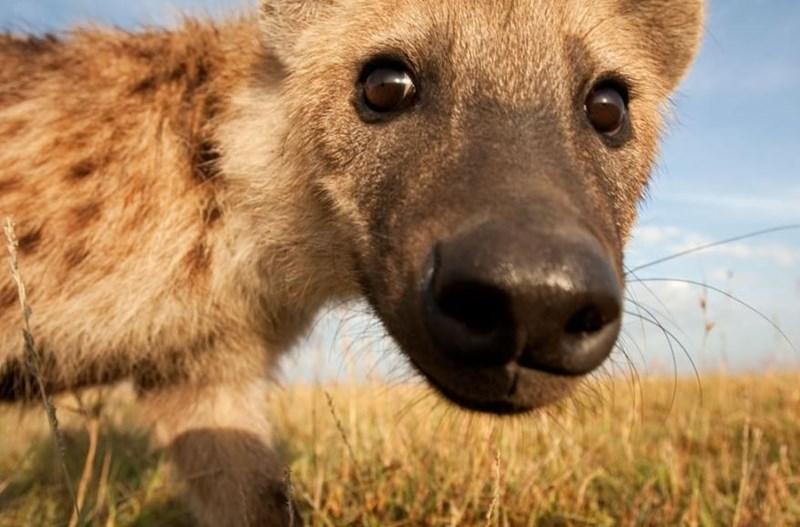 animal selfies - Vertebrate