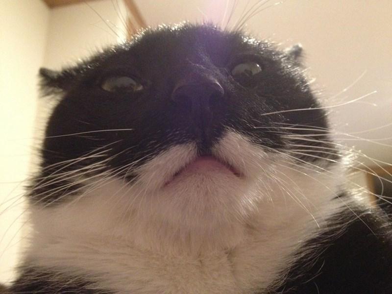 animal selfies - Cat