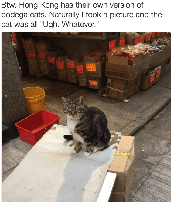 "Cat - Btw, Hong Kong has their own version of bodega cats. Naturally I took a picture and the cat was all ""Ugh. Whatever."" SAN JOAQUIN"